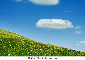 Green meadow on a background of the blue sky