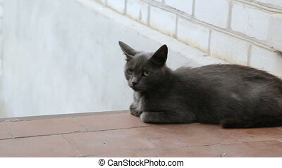 grey cat lies on the surface and looks around