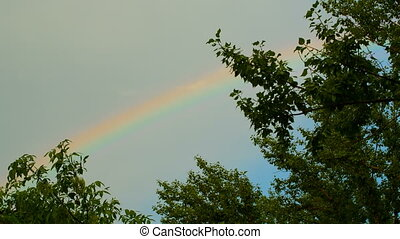 Rainbow over the trees - beautiful rainbow at the sky
