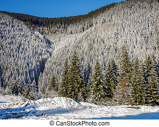Snow Covered Pine Wood - Winter Landscape With Carpathians...