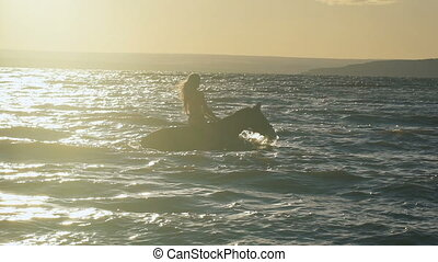 A young beautiful sexy blonde woman in bikini in the sea riding a brown horse. A hot lady swimming on the horse