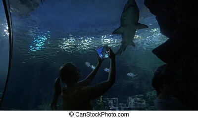 Woman with touch pad shooting shark in oceanarium - Woman in...