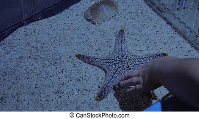 Female hand touching starfish in aquarium - Woman hand...