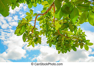 Beautiful trees branch on blue sky - Beautiful trees branch...