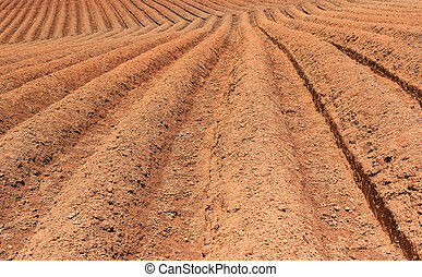 Ploughed field,prepare for planting