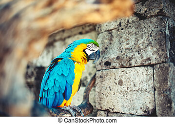 close-up portrait of wild parrot, macaw parrot in amazonian...