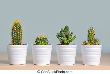 Different cactus in pots - Different types of cactus in pots...