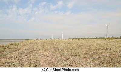 cow grazing near wind farms