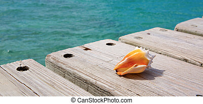 Sea shell on wooden background. - Seashell on wooden...