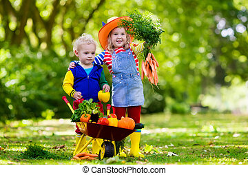 Kids picking vegetables on organic farm - Two children...