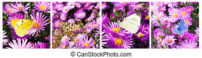 butterfly photo collage horizontal