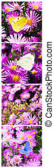 butterfly photo collage vertical