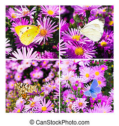 butterfly photo collage square