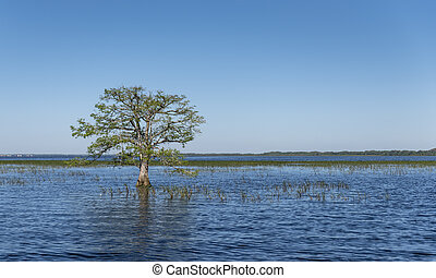 A single tree in the everglades - A single tree, in the...