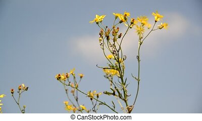 Yellow wild flower in wind against the sky