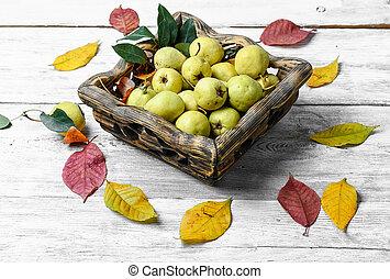 otoño, salvaje, pera