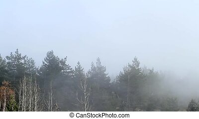Fog in the forest. Taymlaps. - Taymlaps. Quickly looming fog...