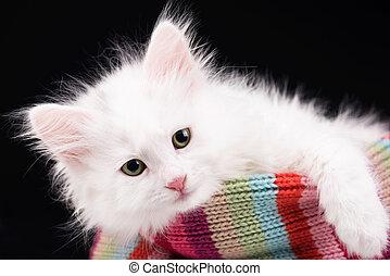 Cute fluffy kitten over black background