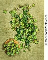 Wild hopDried herbs Herbal medicine, phytotherapy medicinal...