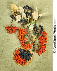 Rowan, rowanberry, Chokeberry, aronia Dried herbs Herbal...