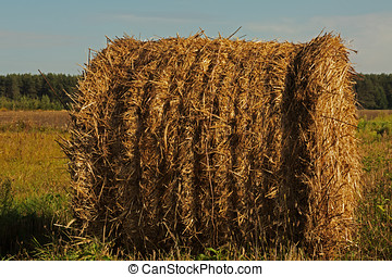 Round bales of hay in the field - Photo of round bales of...