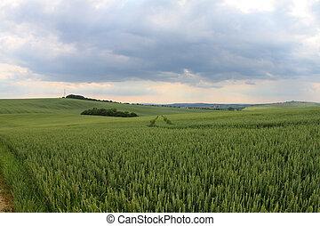 Field in Czech