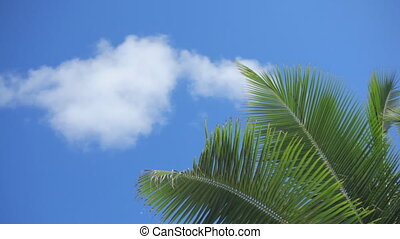 palmleaves at blue sky with cloud - detail of palmleaves at...