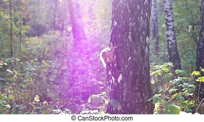 squirrel climbs on a tree