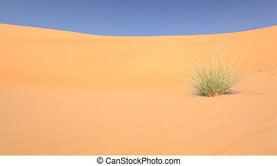 grass in desert.mov