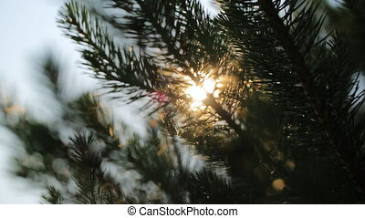 Close up view through tree branches on shining sun. There...