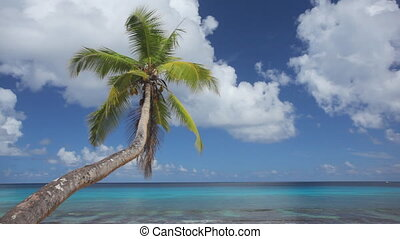 palmtree and calm sea audio - wonderful lagoon with single...
