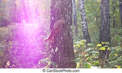 mischievous squirrel jumps on a tree