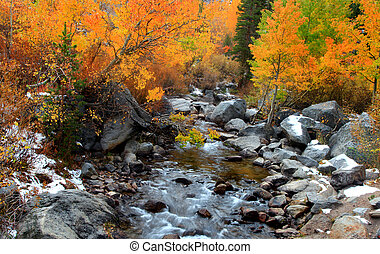 Running water through aspen trees in autumn time