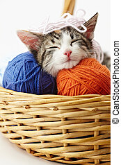 cat playing with yarn - tricolor female kitten sleeping on...