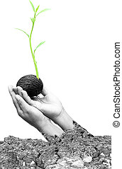 Concept hand holding new life plant with Land dry and...