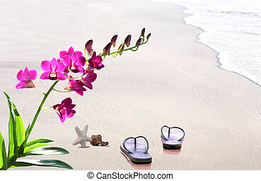 Flip Flops on the beach in the sand with shells and orchid...