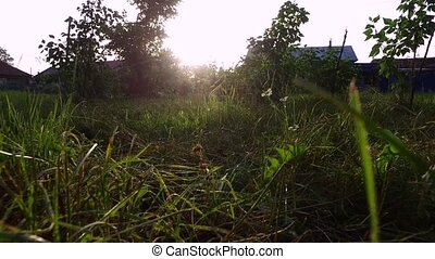 Sunset in the countryside. The sun's rays pass through the grass. Sunny summer evening. Windless weather.