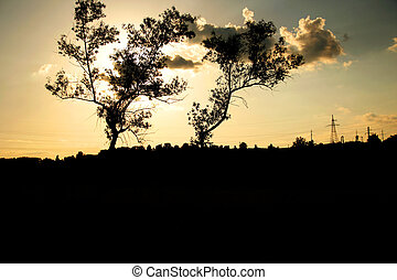 trees at night
