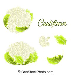 Cauliflower Vector.eps - Cauliflower with leaves healthy...