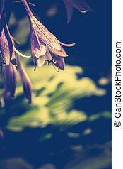 Trädgård, blåklocka, blomma
