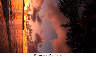 sunset vertical with palmleafs - Colorful sunset vertical...