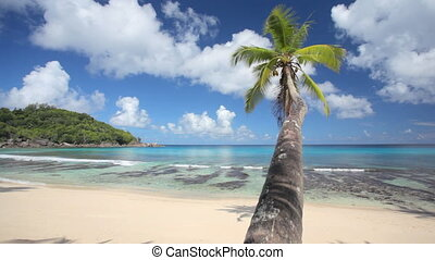 time to relax under palmtree - single palmtree on sandy...