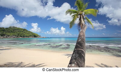 perfect beach closer - wonderful sandy beach with palmtree...