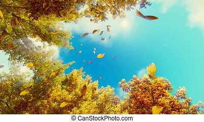 Falling autumn leaves and blue sky - Motion through golden...