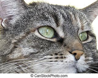 pensando, semelhante, gato