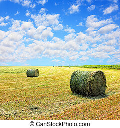 Golden stubble field and hay bales against cloudy sky. -...