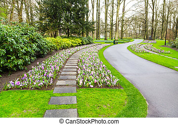 Colorful hyacinth and crocus flowers blossom in dutch spring garden
