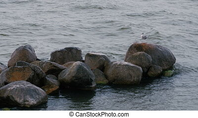 A seagull on a rock.