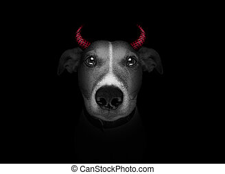 dog isolated on black - halloween witch jack russell dog...