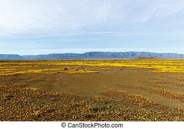 Yellow Plateau with flat landscape Tankwa Karoo